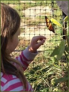 Monarch Release.jpg