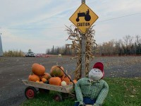 belluz-farms-sign.jpg