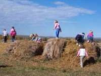 belluz-farms-straw-walk.jpg