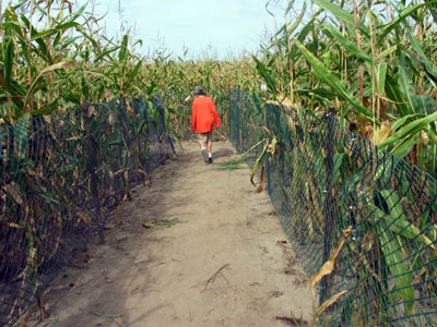 chappell-farms-maze.jpg