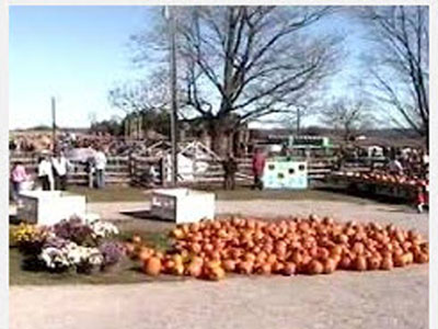 chappell-farms-pumpkins.jpg