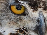 owl-prowl-backus.jpg