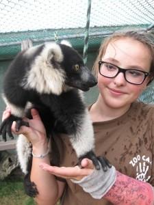 Ruffed Lemur  (s512).JPG