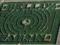 belluz-farms-maze.jpg