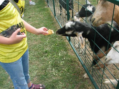 chappell-farms-animals.jpg