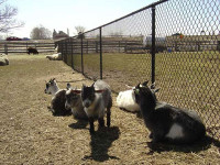 chappell-farms-farm-animals.jpg