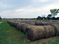 chappell-farms-hay.jpg