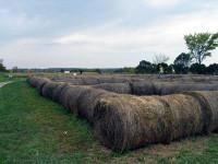 chappell-farms-hay.jpg