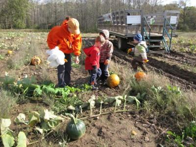 pumpkinland.jpg